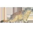 Image Marmotte